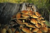 image of spores  - Mushrooms in the forest - JPG