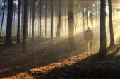 stock photo of fall day  - Photographer in misty haze forest in autumn forest
