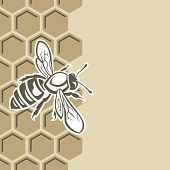 picture of honeycomb  - monochrome design with bee and of honeycomb - JPG