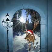 Reindeer In Winter Wonderland, Christmas Design