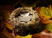 Bird's Nest filled with American currency and autumn leaves