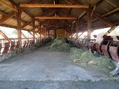 picture of barn house  - Inside of barn house and cow in a farm in France - JPG