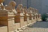 stock photo of ptolemaic  - Avenue of ram - JPG