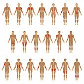 pic of male body anatomy  - vector muscular human body - JPG