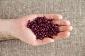 stock photo of hands-free  - Man displaying small deep red kidney beans fat free and rich in protein and dietary fiber in the palm his hand over a beige fabric with weave texture - JPG