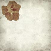 stock photo of nasturtium  - textured old paper background with Tropaeolum majus garden nasturtium - JPG