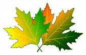 White background with autumnal leaves for a design. Vector