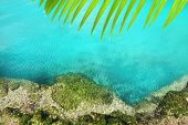 stock photo of cenote  - cenote mangrove clear turquoise water Mayan Riviera Mexico - JPG
