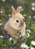 Cute bunny rabbit in colorful meadow poster
