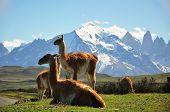 Llama In Landscape
