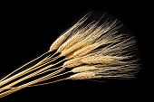 Bunch Of Wheat Ears