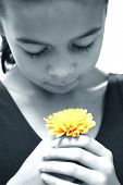 Young girl appreciating the beauty of a single yellow chrysanthemum. Rendered dual tone.