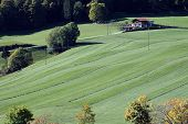Mowed Grassland