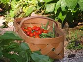 Beans And Tomatoes In A Basket