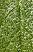 Natural Background - Sparkling Raindrops On Leaf