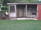 picture of chicken-wire  - Rustic chicken coop with hens and rooster. ** Note: Slight blurriness best at smaller sizes - JPG
