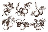 Vintage Collection Of Ripe Fruits And Berries  - Apple, Pear, Plum, Peach, Apricot Trees Sketches. H poster