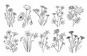 Wild Flowers. Sketch Wildflowers And Herbs Nature Botanical Elements. Hand Drawn Summer Field Flower poster