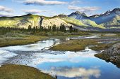 picture of boggy  - The silent river surrounded by fur - JPG