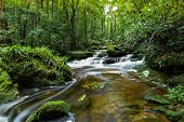 Mountain River Stream Waterfall Green Forest / Landscape Nature Plant Tree Rainforest Jungle Small W poster
