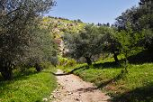 Footpath among the blossoming spring nature. The north of Israel, mountain Meron