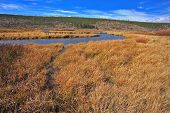 Arroyo llano, superficial y hierba amarilla de otoño en el Parque de Yellowstone en los Estados Unidos