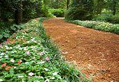 Elizabethan Gardens forest trail