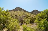 image of stagecoach  - Tejas Canyon rocky cliffs - JPG