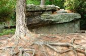 tree trunk and roots by a rock outcropping