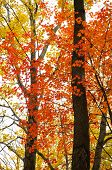 red and yellow leaves on trees in fall