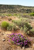 blooming desert cactus flowers