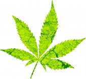picture of medical marijuana  - cannabis leaf illustration - JPG