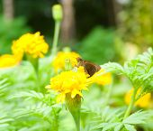 Butterfly With Flowers And Spiders.