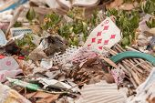 Old Playing Card On A Pile Of Garbage