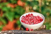 picture of bearberry  - A bowl of large frozen cranberries on a tree stump - JPG