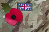 Remembrance day poppy appeal