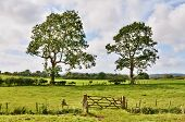 Trees and a field gate in rural English landscape