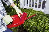 stock photo of trimmers  - Horizontal photo of woman and power trimmer cutting the hedges with patio in background - JPG