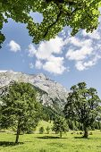 Trees And Sunlight In Austria Alps Hinterriss