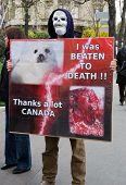 Protests Against Canadian Seal Hunt