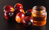 Oil palm fruits and cooking oil