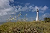 picture of sea oats  - The Cape Florida lighthouse on Key Biscayne in Florida - JPG