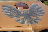 Pontiac Trans Am Copper Firebird Hood
