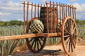 stock photo of ox wagon  - Old mexican trailer in front of blue agave plantation - JPG