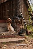 spaniel with hunting bird and ammunition