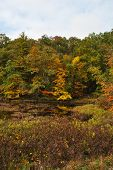 Rural Fall Foliage