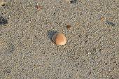 A beautiful shell on the beach sand