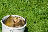 Big Fishing Catch In Bucket Water On Meadow