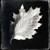 Instagram filtered image of a vintage metal autumn leaf