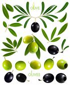 Big collection of black and green olives for your design. Vector illustration.